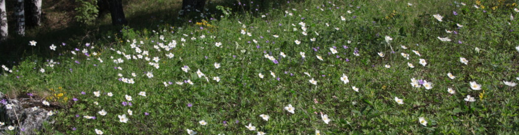 Полезные растения в природе