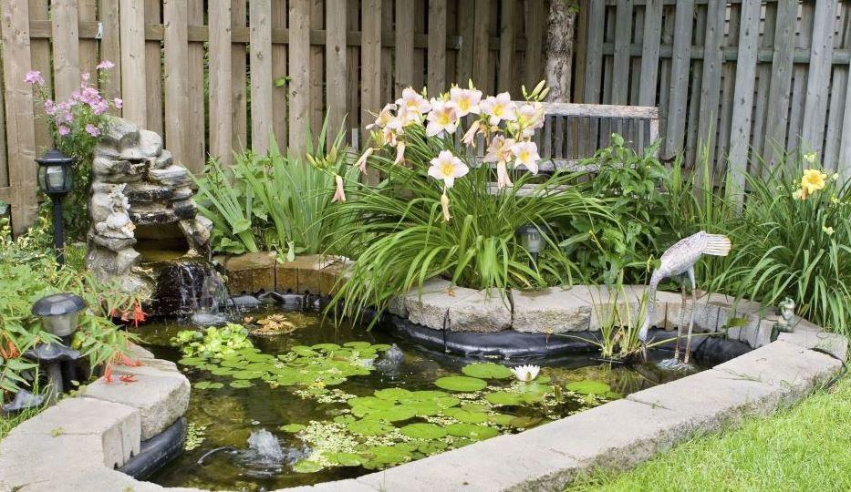 Декоративный пруд с водными и околоводными растениями.