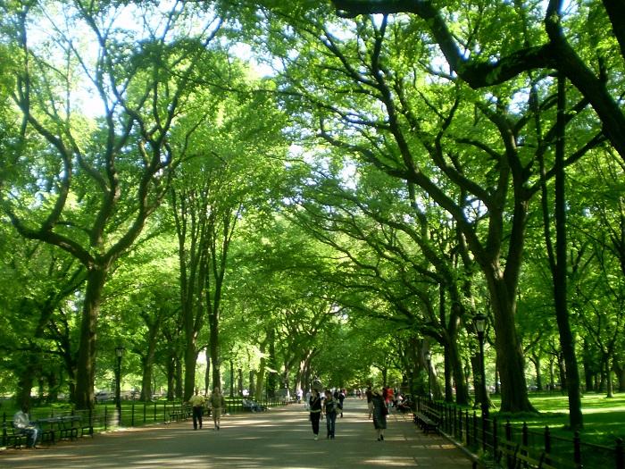 Ильмовая (вязовая) аллея в парке