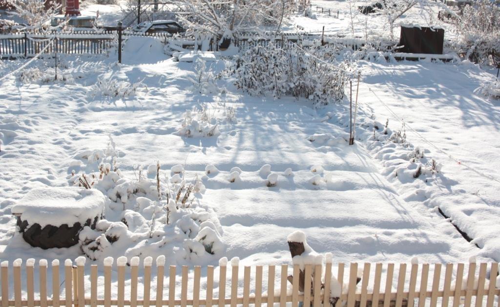 садовые работы в ноябре