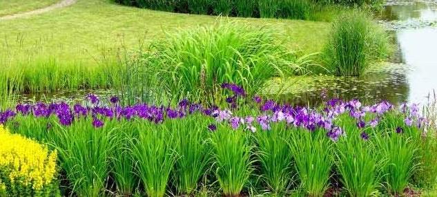 Водный сад на участке