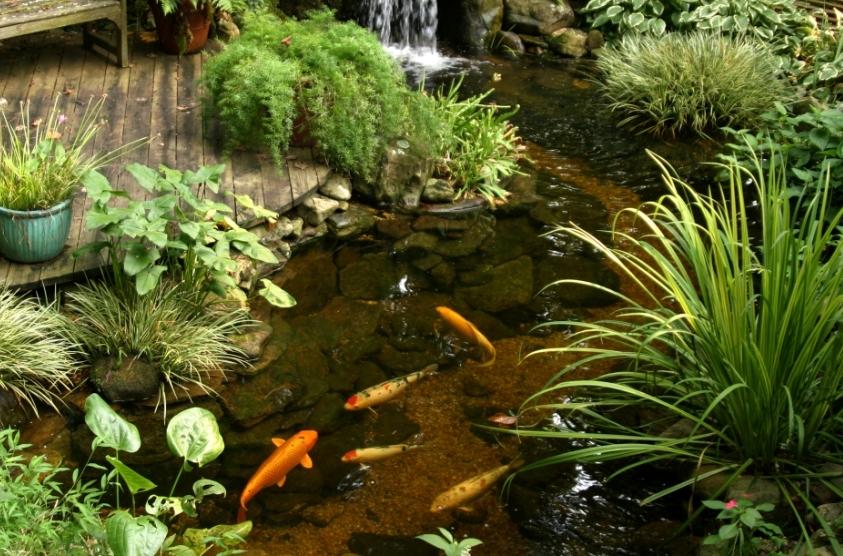 Пруд, превращенный в водный сад